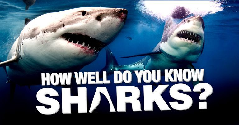 How Well Do You Know Sharks?